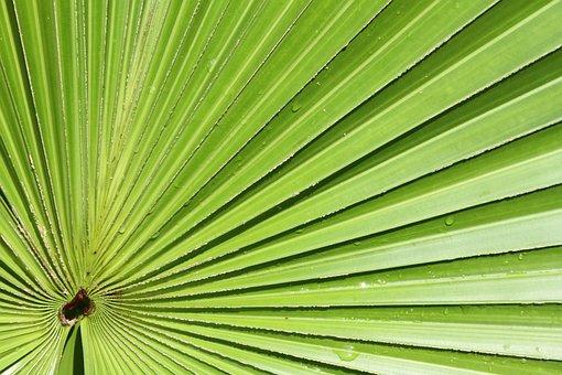 Palm, Leaf, Foliage, Plants, Tropical