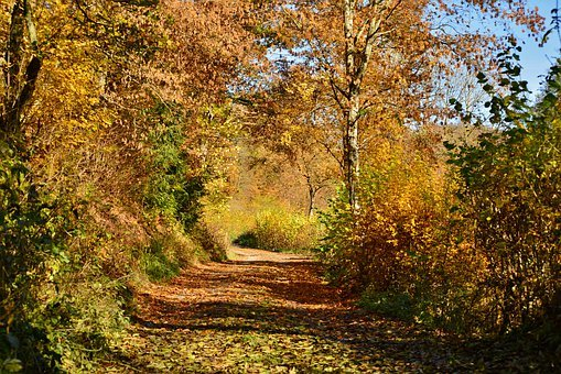 Autumn, Forest, Forest Path, Trees, Landscape, Leaves