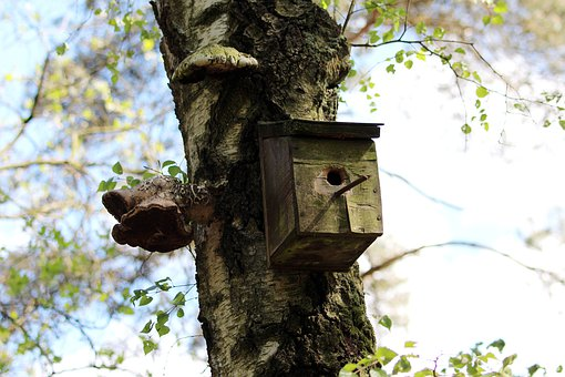 Aviary, Tree, Nesting Box, Nature, Bird Feeder