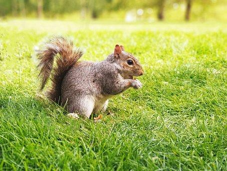 Nature, Squirrel, Soft, Green, Park, Natural, Animal