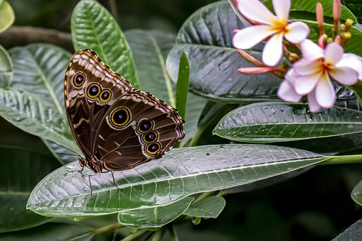 Butterfly, Nature, Plant, Flowers, Spring, Petals