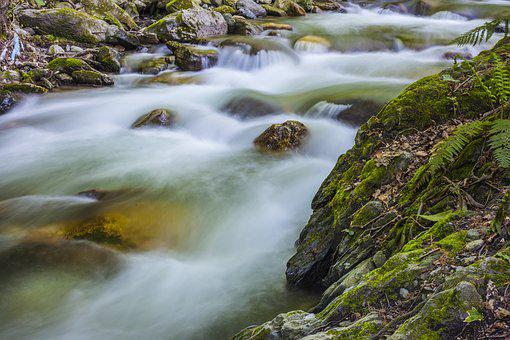 Streaming, Forest, Water, Dd, River, Green, Plant