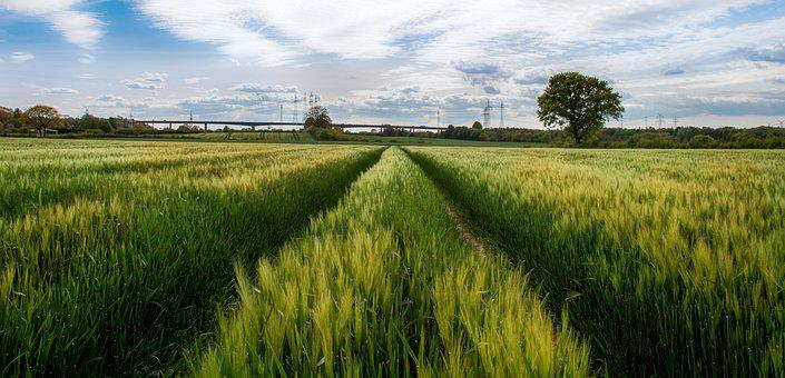 Rade, Rader High Bridge, Cornfield, Field, Cereals