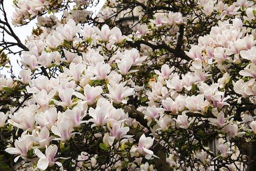 Flowers, Little Flowers, Floral, Blooming, Summer