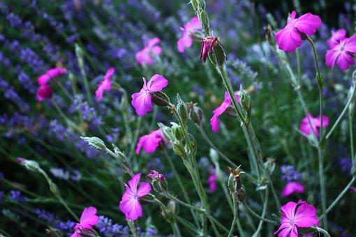 Flowers, Green, Purple, Nature, Summer, Bloom, Plant