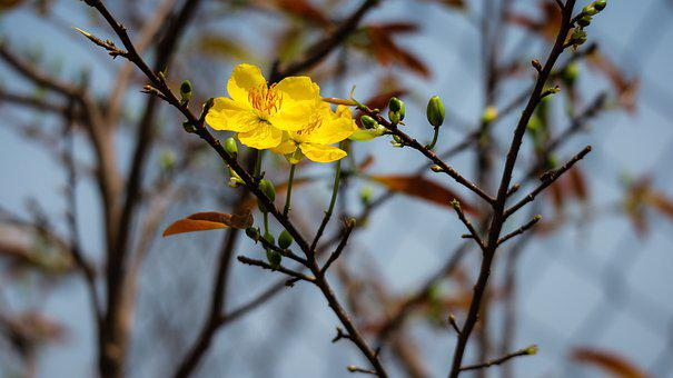 The Lunar New Year, Spring, Weather, Flower