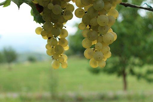 Wine, Grapes, Grape, Krems, Vineyard, White Wine