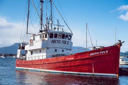 Arctic Fox, Ship, Vessel, Arctic, Sea, Ocean, Water