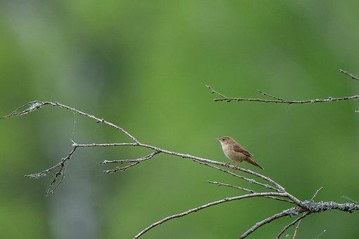 Bird, Avian, Nature, Animal, Wildlife, Swamp