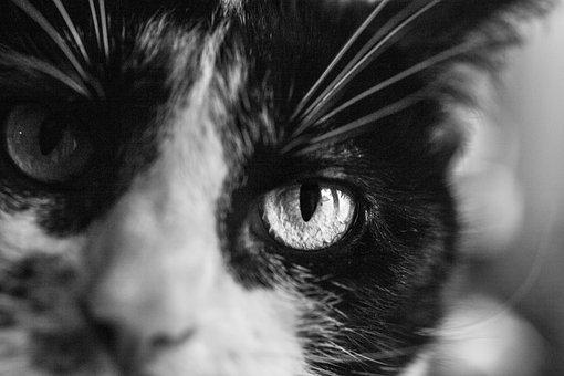 Cats, Eye, Face, Pet, Whiskers, Animal, Striped