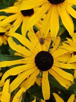 Garden, Daddy Long Legs, Yellow, Flower, Summer