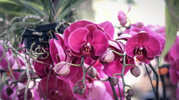 Orchids, Purple, Beautiful Flowers, Flowers Bloom