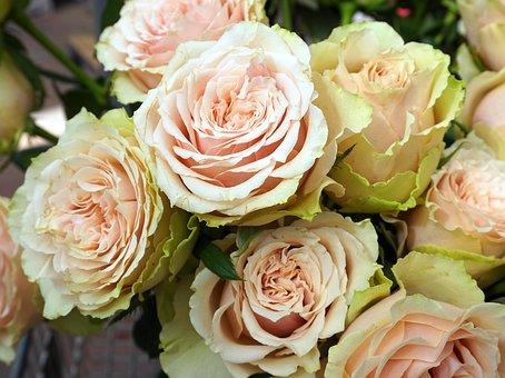 Roses, Flowers, White, Romantic, Bouquet, Flora