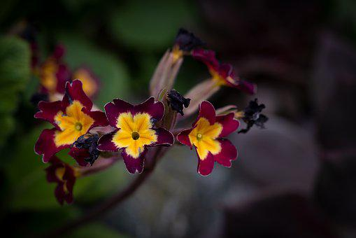 Flowers, Flower, Nature, Garden, Plant, In The Garden