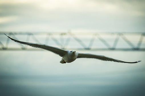 Seagull, Bird, The Sky, Flying, Nature, Wings, Sea