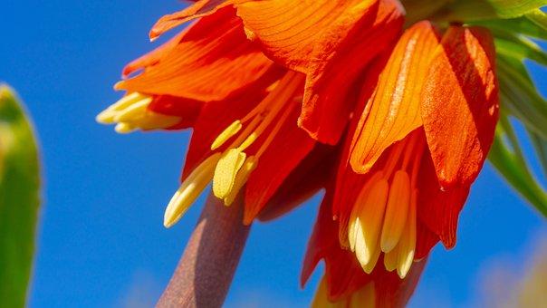 Flowers, Macro, Flower, Nature, Garden, Close, Blue