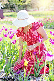 Garden, Gardening, Flowers, Tulips, Spring, Woman, Hat