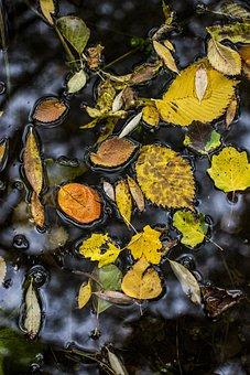 Leaves, Water, Autumn, Colorful, Fall, Mood, Seasonal