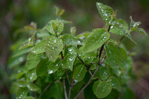 Leaves, Green, Drop Of Water, Nature, Branches