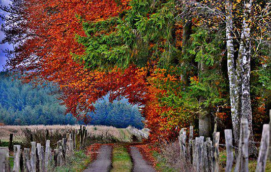 Autumn, Forest Path, Forest, Vote, Trees, Leaves