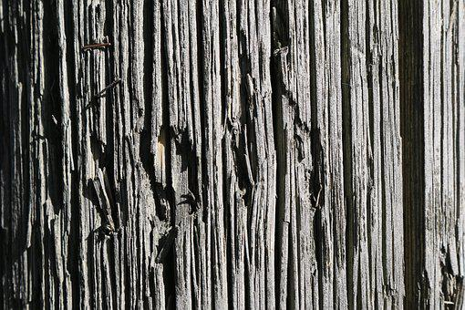 Wood, Material, Nature, Natural, Tree, Strong, Stripe