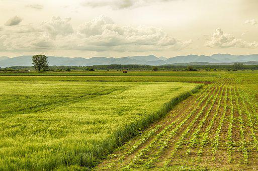 Spring, Crops, Green, Planting, Farming, Agriculture