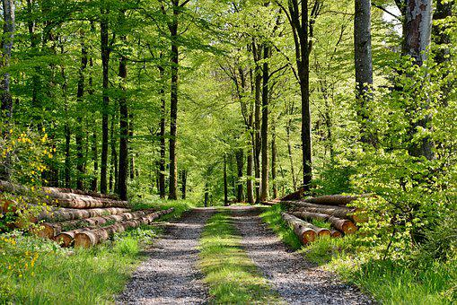 Nature, Forest, Forest Path, Spring, Trees, Landscape