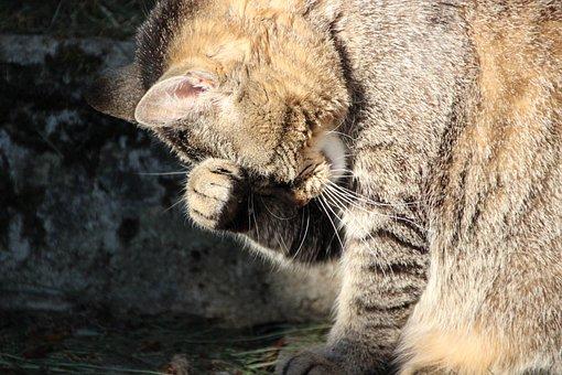 Cat, Funny, Pet, Thoughtful, Sweet, Mackerel, Charming