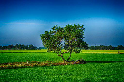 Alone, Tree, Nature, Landscape, Lonely, Dark, Cold