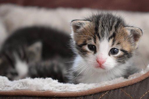 Cat Baby, Kitten, Cat, Mieze, Baby Cat, Pet, Putties