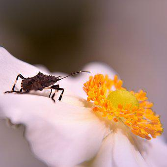 Bug, Blossom, Bloom, Insect, Beetle, Close Up, Flower