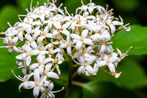 White, Flower, Nature, Blossom, Summer, Spring, Plant