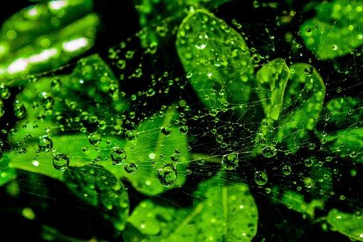 Web, Wet, Droplets, Green, Leaves, Dewdrop, Spiderweb