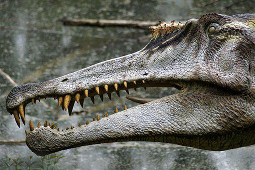 Dinosaur, Forest, Tooth, Image, Reptile, Animal, Dino
