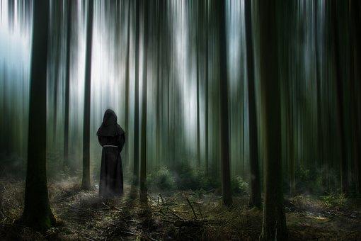 Forest, Trees, Mystical, Fog, Magic, Sunbeam, Haze