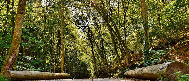 Forest Path, Nature, Forest, Trees, Trunks, Landscape