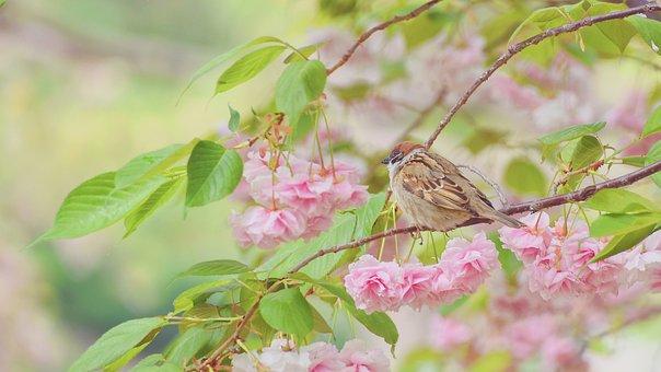 Bird, Natural, In Full Bloom, Outdoor, Colorful, Garden