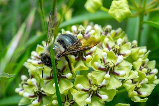 Bug, Green, Flower, Nature, Blossom, Summer, Spring