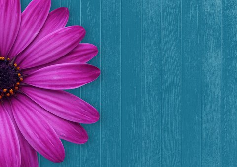 Background, Flower, Wood, Spring, Greeting Card