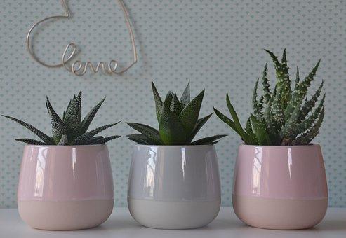 Cactus, Pots, Plant, Prickly, Houseplant, Decorative