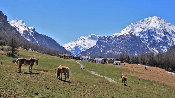 Meadows, Mountain, Horses, Alpine, Panorama, Idyllic