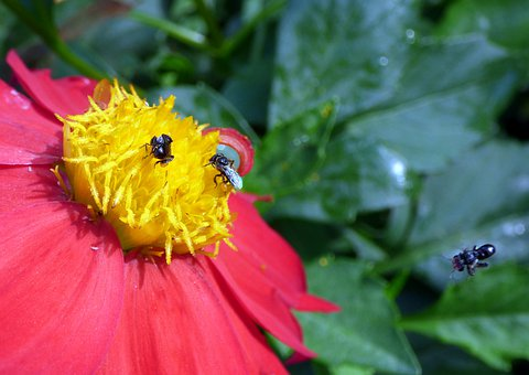 Bee, Insect, Nectar, Pollen, Animal, Yellow, Stripes