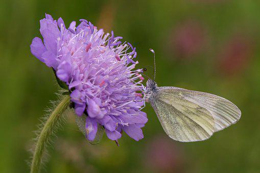 Butterfly, Flower, Insect, Close Up, Pointed Flower