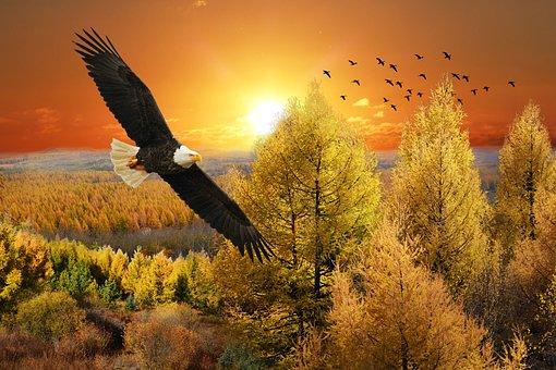 Eagle, Sunset, Landscape, Trees, Sky, Nature, Birds