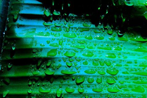 Banana, Leaf, Wet, Night, Droplets, Green, Plant