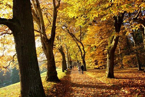Autumn, Mainau, Tree, Away, Leaves, October, Forest