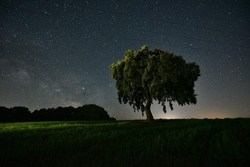Field, Night, Star, Agriculture, Space, Lights, Scenic