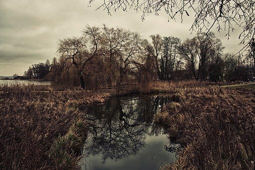 Swamp, Nature, Forest, Moor, Landscape, Water, Mystical