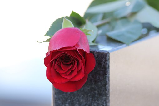 Red Rose, Black Marble, Love Symbol, Gravestone, Nature