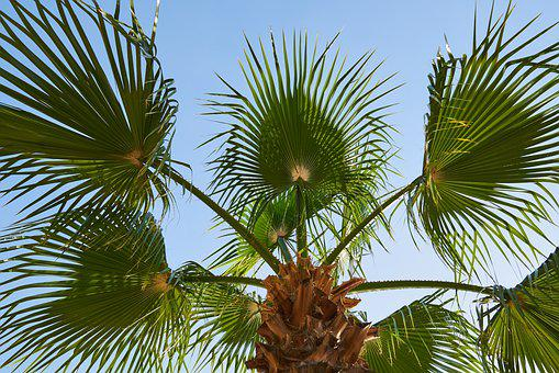 Palm, Leaves, Tropical, Plant, Nature, Summer, Tree